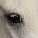 Horse Eye by JBendeth