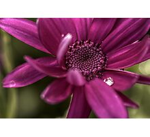 Senetti Water Droplet Photographic Print