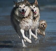 Doglympic Games - Synchronised Running by archenar76