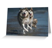 Doglympic Games - Synchronised Running Greeting Card