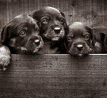3 pups by ozzzywoman