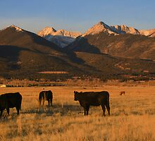 Cows Below the Sangre De Cristos by Paul Gana