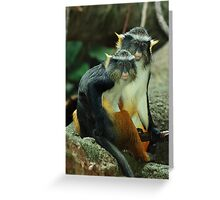 Two Wolf Guenons (Cercopithecus wolfi) Greeting Card