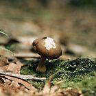 mushroom 1 by amanda marx