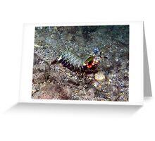 Mantis Shrimp, Eastern Indonesia Greeting Card