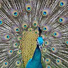 Peacock by sharaff