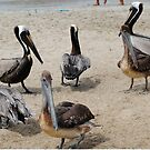 Pelican Party by Sandra Fortier