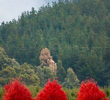 Red Tops by John Conway