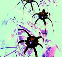unknown wild flower by Fraser Linden