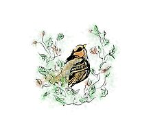 Floral Bird Photographic Print