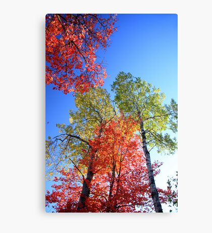 October Colours Canvas Print