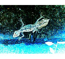 southern leaf tailed gecko Photographic Print