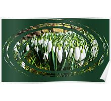 Swirly Snowdrops Poster