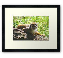 Squirrel monkey.......... Framed Print