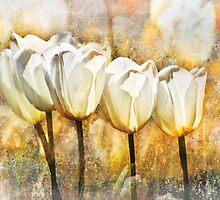 White Tulips  by Sabine Spiesser
