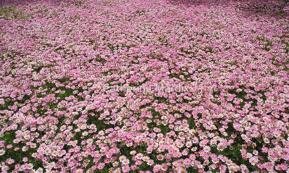 Fields of Pink by Catherine Mardix