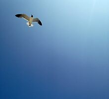 Seagull by MorganHoffman
