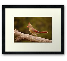 The Cardinal strut Framed Print