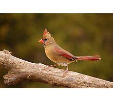 The Cardinal strut Photographic Print