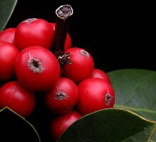 Red Berries by jerry  alcantara