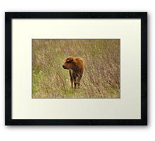 Spring Buffalo Calf Framed Print