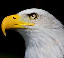 Eagle Portrait....... by jdmphotography