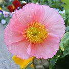Capital Flower ~ 5 by NancyC