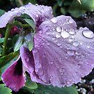 Purple Rain by NancyC