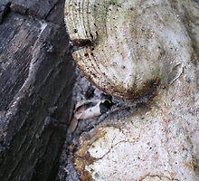 Fungi by Rebekah  McLeod
