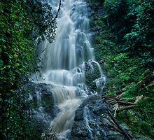 Cedar Falls, Dorrigo National Park by Clare Colins