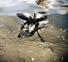 Make a splash by Jonathon Wilson