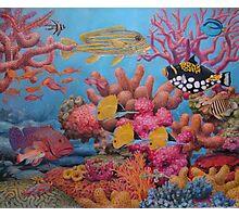 Sulawesi Reef Photographic Print