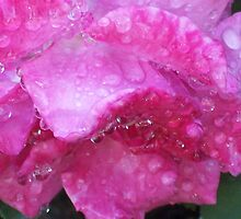 Drops in Pink by Shaina Lunde