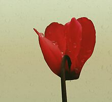 In red by Anne Staub
