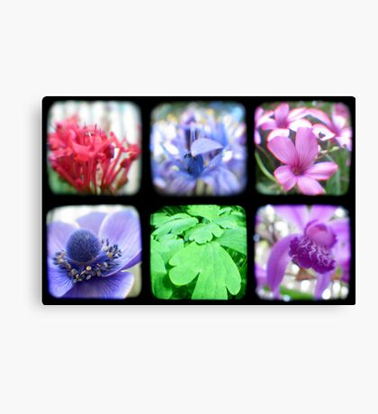 My Garden Through the Viewfinder Canvas Print
