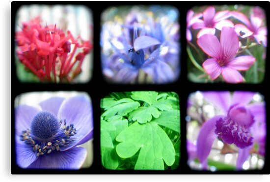 My Garden Through the Viewfinder by Kitsmumma