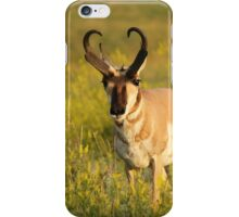 Pronghorn on the plains iPhone Case/Skin
