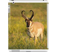 Pronghorn on the plains iPad Case/Skin