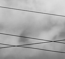 Bird on a Wire by J. Sprink