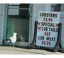 Prices are so low................even the gulls can't resist!! Photographic Print