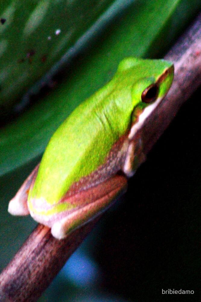 Aloe Froggie by bribiedamo