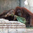 Orangutan Music by Marie Terry