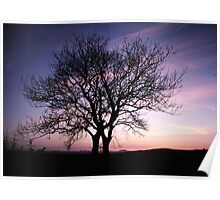 Two Trees embracing Poster