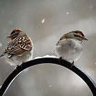 Both sides of the sparrow by WalnutHill