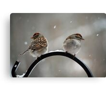 Both sides of the sparrow Canvas Print