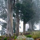 Morning Mist on Lake Te Anau by Magee