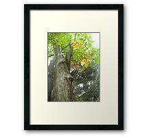 Autumn Crown Framed Print