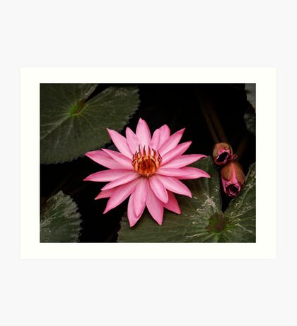 plant types #45, lotus flower Art Print