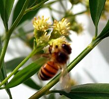 Quest for nectar by ♥⊱ B. Randi Bailey