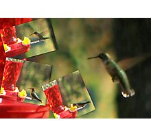 Humming Bird... Photographic Print